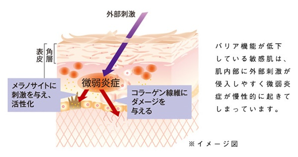 肌内部の炎症はコラーゲンを壊す