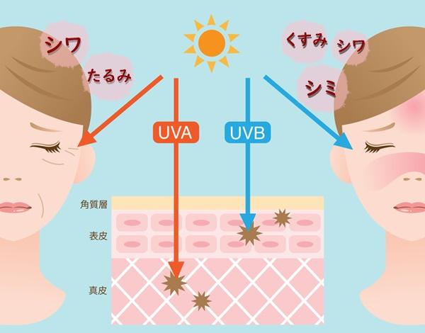 紫外線A波はシワ、たるみの原因になり、紫外線B波はシミ、くすみ、シワの原因になります